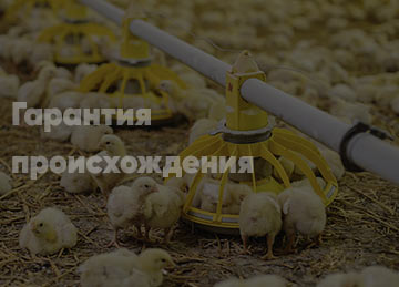 Курятина без антибиотиков ПАН КУРЧАК